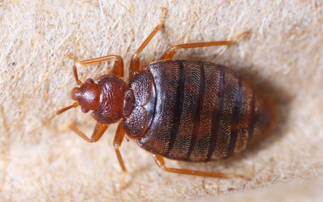 Turn Up The Heat On Those Bed Bugs